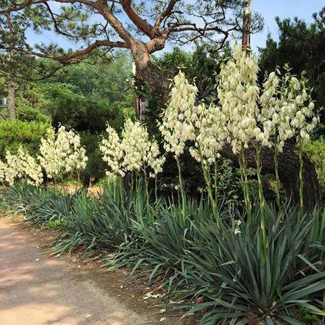꽃 정원에 관한 상위 20개 이상의 Pinterest 아이디어  다년생식물 ...
