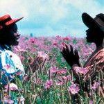 Il colore viola ( Anno 1985)