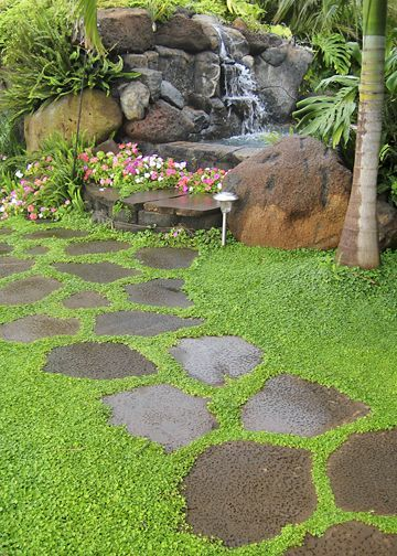 Garden path, stepping stone.  *ground cover Corsican Mint (?)*