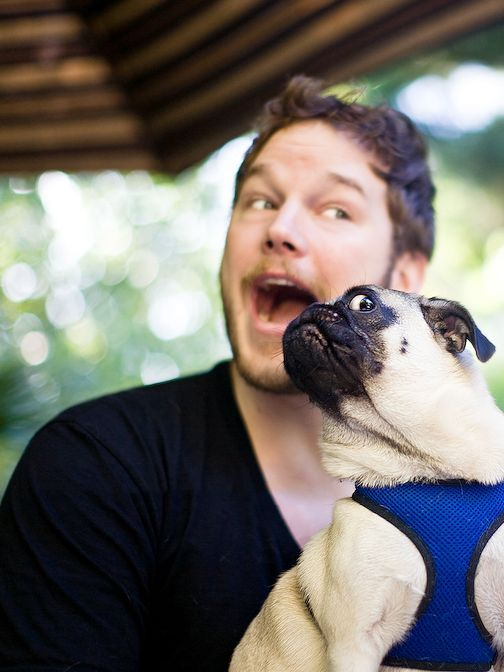 This picture of Chris Pratt and a pug is perfection.