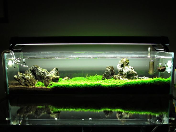 12 gallon long rimless escape updated 4 17 aquascaping for Rimless fish tank