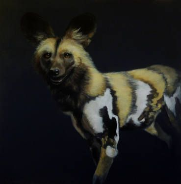 African wild dog - Lycaon pictus
