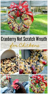 Scratch Sunflower Nut Edible Treat Wreath for Chickens