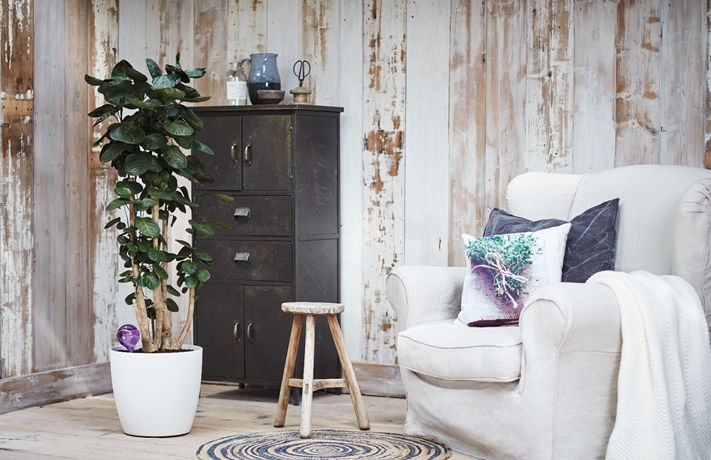 Jak dbać o rośliny doniczkowe w styczniu? - Inspirowani Naturą | home design by elho at makeithome.pl
