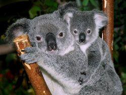 Australia/Sydney/Zoo
