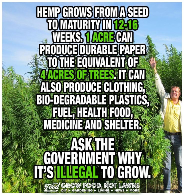 Hemp could be so useful. If only our government would do what is in the best interests of the people it claims to serve.