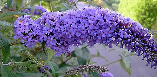 Blütensträucher ganz einfach vermehren - Mein schöner Garten