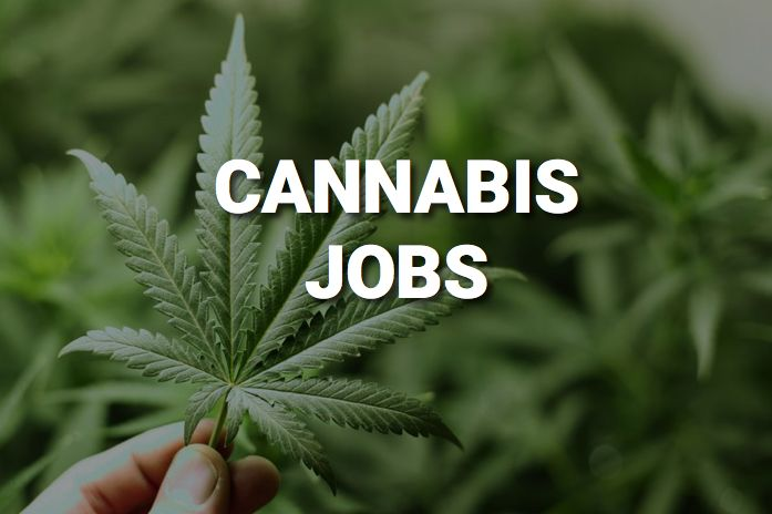 Succeeding in the Cannabis Industry