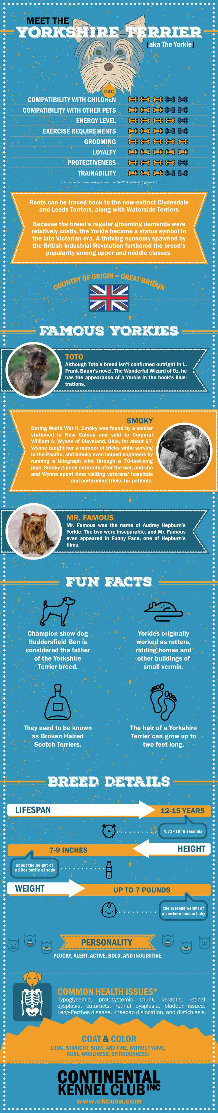 Yorkshire Terrier Breed Information Infographic #yorkie