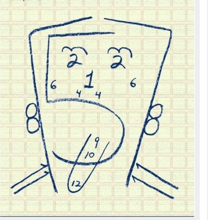 cranial nerves...this lil drawing would have been nice to have in grad school to learn what each cranial nerve effects ;)