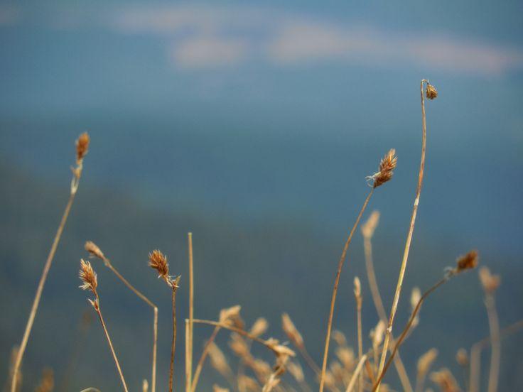 grass haulms