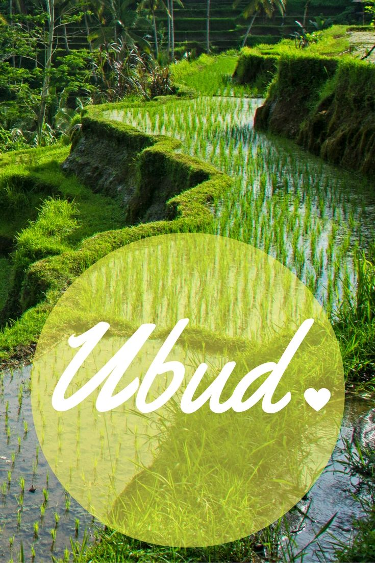 Ubud, im Herzen von Bali, hat mich einfach sofort verzaubert.