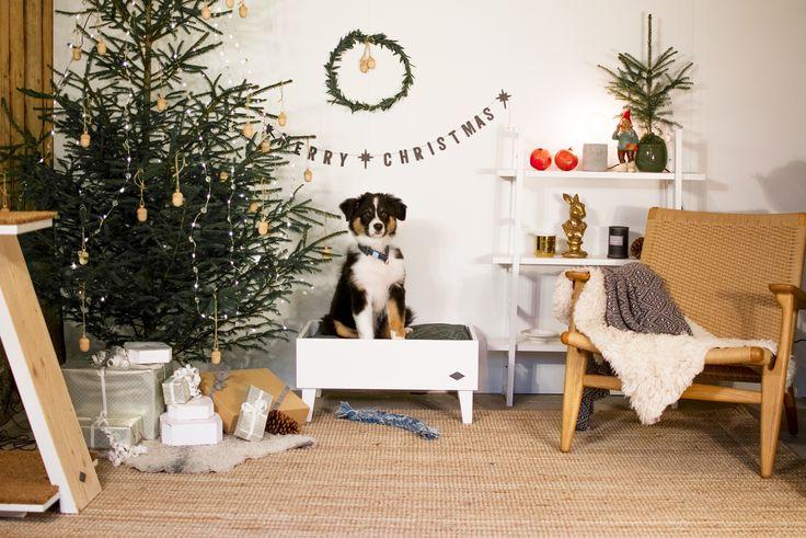 Miwo® Liden Hundsäng. Australian Shepherd. Merry Christmas. Jul.