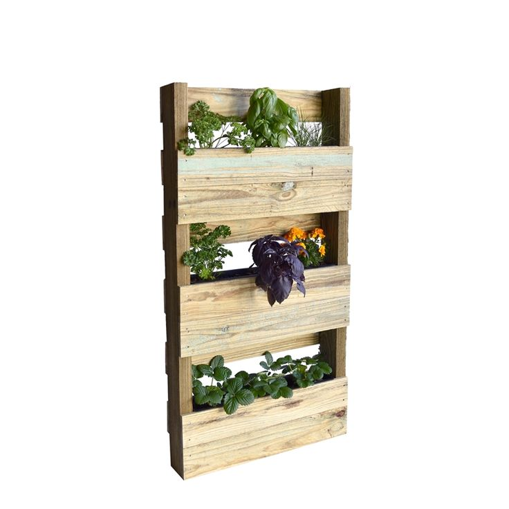 Find Birdies 900 x 570mm Vertical Garden Timber Plantawall at Bunnings Warehouse. Visit your local store for the widest range of garden products.
