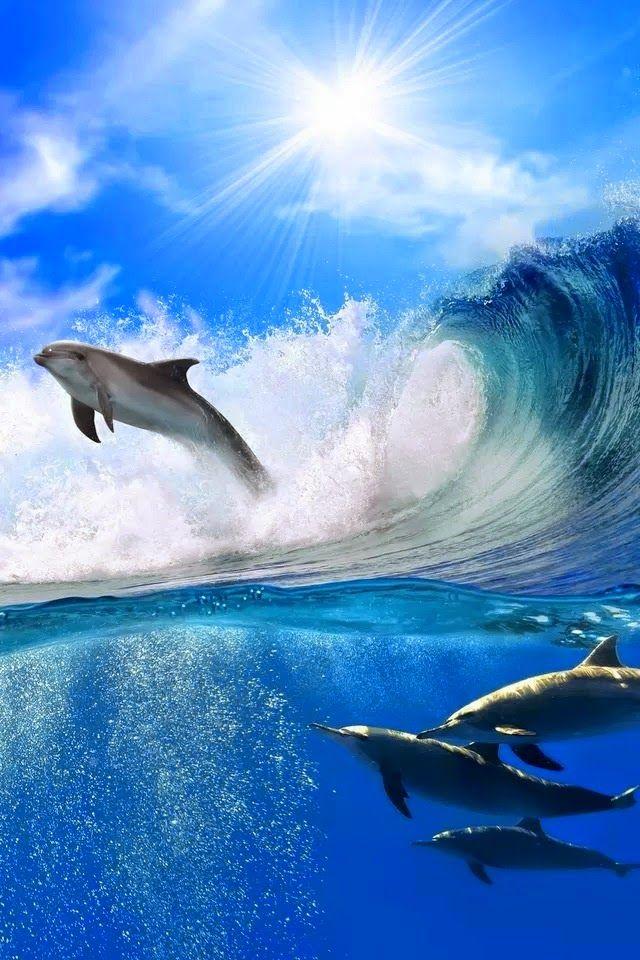 20 Animais em ação - Fotos Incríveis! - Wildlife