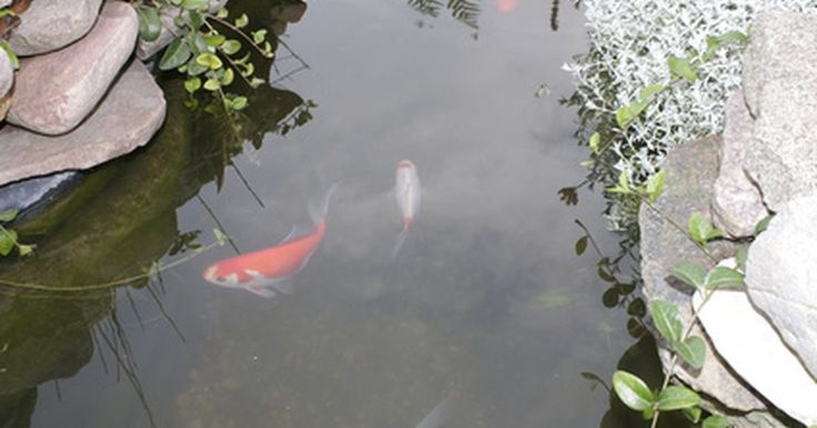 Las mejores bombas para un estanque pequeño de peces. Un pequeño estanque con peces necesita la bomba adecuada o los peces no sobrevivirán y el estanque se convertirá en un pantano. Antes de comprar una bomba, determina el tipo de pescado para el estanque, Koi llegar a ser muy grande y son desordenados por lo que su estanque necesita filtración mayor que con los peces más pequeños. La regla de oro ...