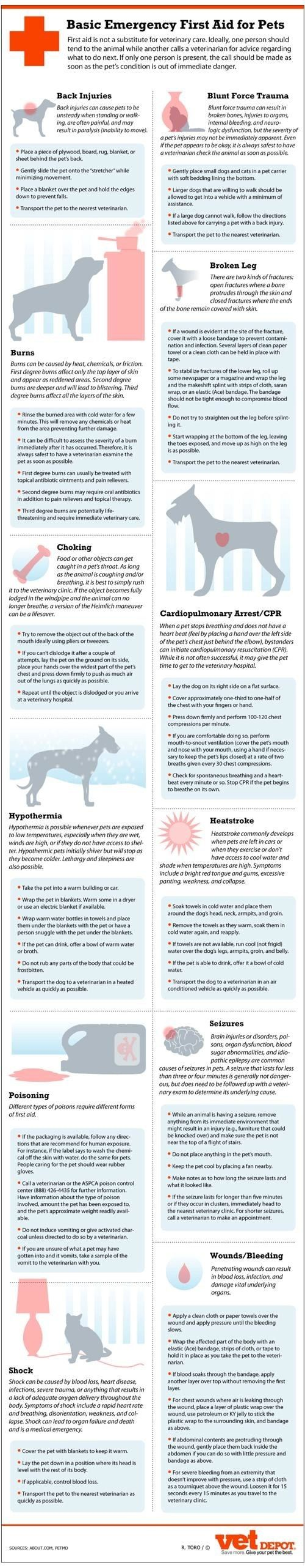 Basic Emergency First Aid For Pets | Community Post: 30 Dog Charts Every Dog Lover Should Have