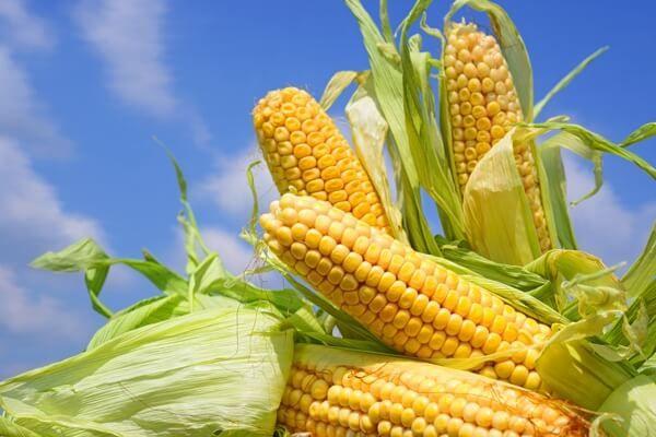 Agropatria obliga a productores vender 20% de la cosecha a silos del Estado - Visión Agropecuaria