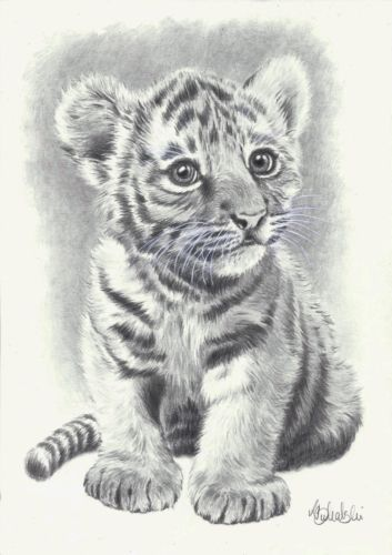 WILD ANIMAL PRINT OF AN ORIGINAL PENCIL DRAWING, BABY TIGER SIZE A4