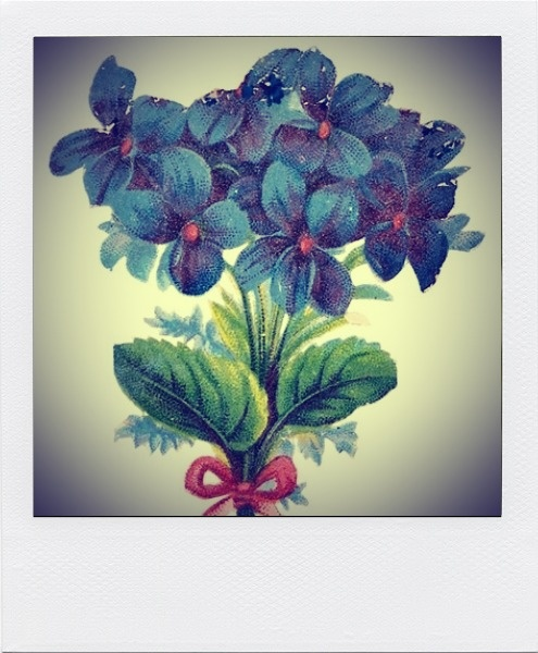 Hortensia polaroid