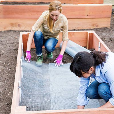 Deter burrowing pests with hardware cloth - How to Build a Raised Garden Bed - Sunset