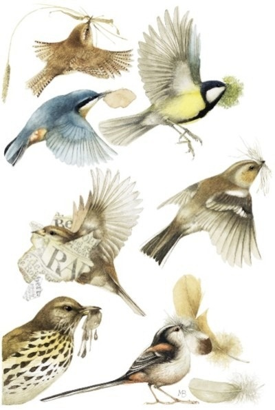 Marjolein Bastin - birds and their nesting materials