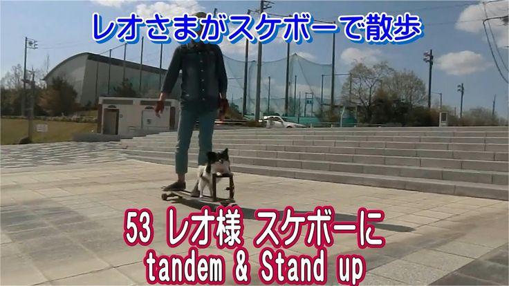 53 レオ様 スケボーに tandem & Stand up