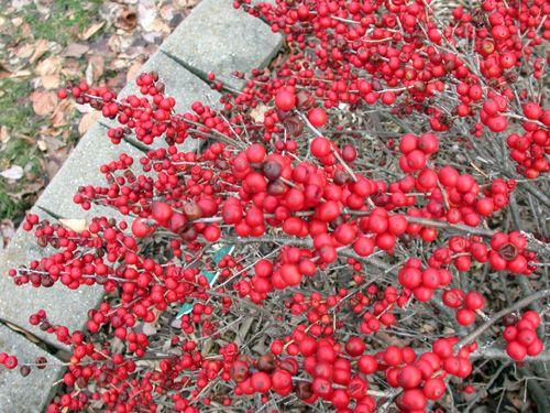 michigan - native plants