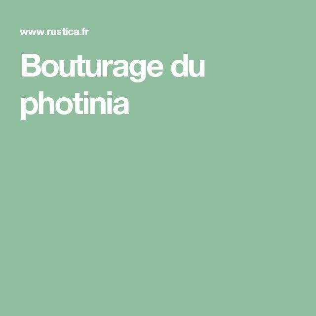 Bouturage du photinia