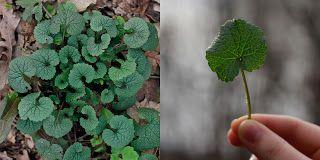 Fascinanta lume a naturii: Frunzele si caracteristicile lor