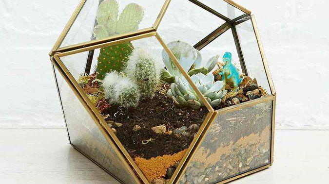 27 best plantes vertes images on pinterest index cards interview and house plants decor. Black Bedroom Furniture Sets. Home Design Ideas