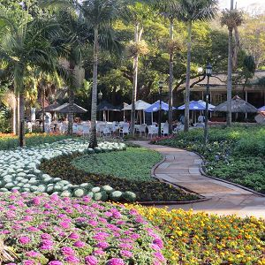 Durban's only zoo has a wide variety of species such as duiker, raccoon, wallaby, mongoose, marmoset, as well many beautiful endemic and exotic birds, including flamingos, scarlet ibises and hornbills.