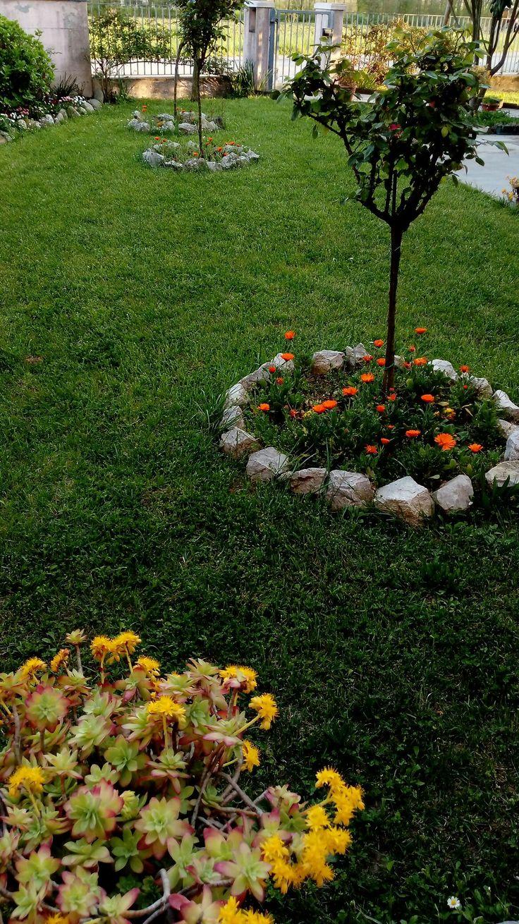 Pin su Piante - fiori (giardino)