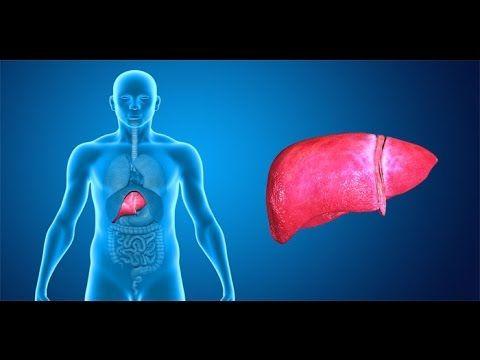 Cómo limpiar el hígado para bajar de peso | Salud