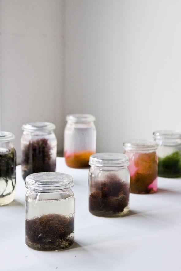Jars with different kinds of seaweed   Colors of the Oosterschelde   Project by Xandra van der Eijk & Nienke Hoogvliet