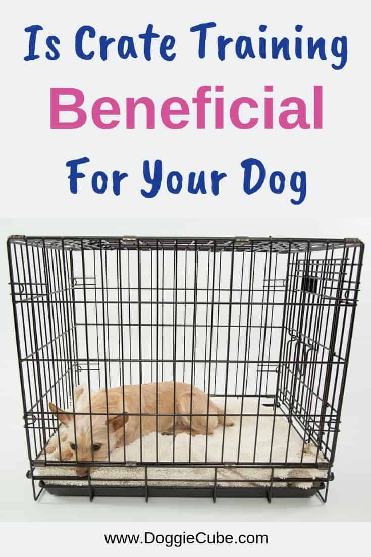 Is Crate Training Beneficial For Your Dog Dog Crate Crate