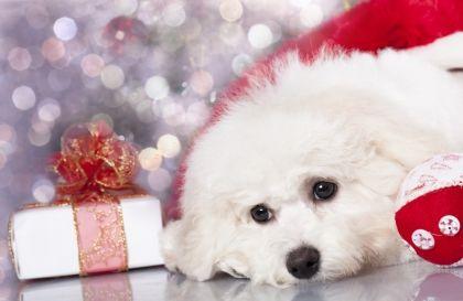 10 ways to help the animals this holiday season. #vegan #animals