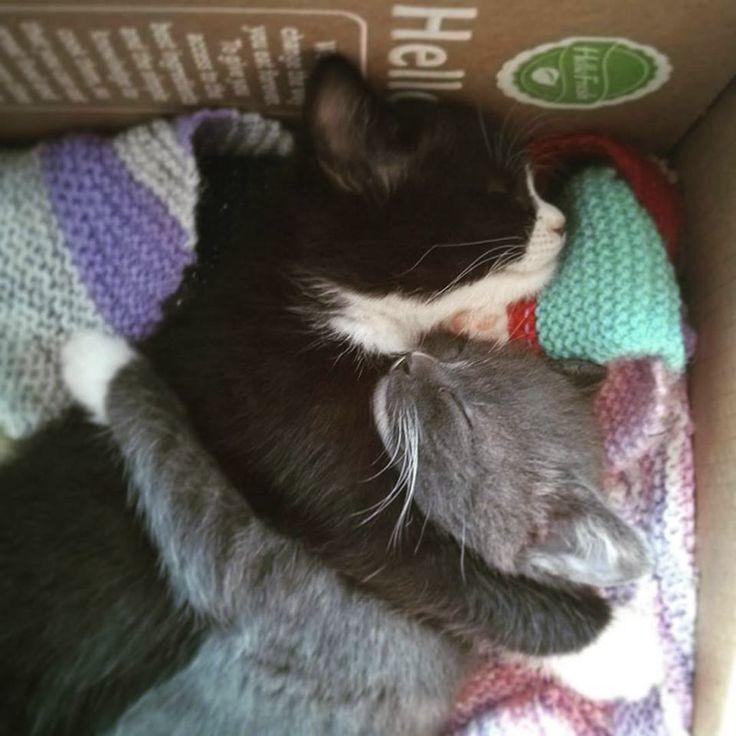 Kitten Cuddles Are the Best Cuddles