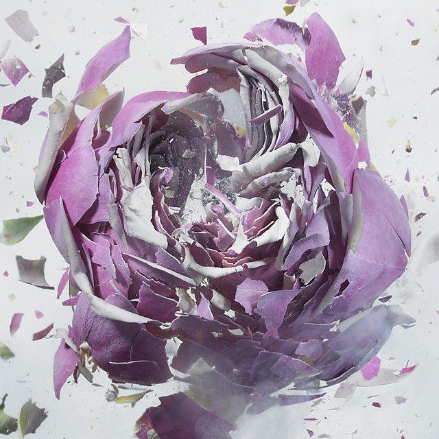 « Rapid Bloom », une excellente série réalisée par Martin Klimas