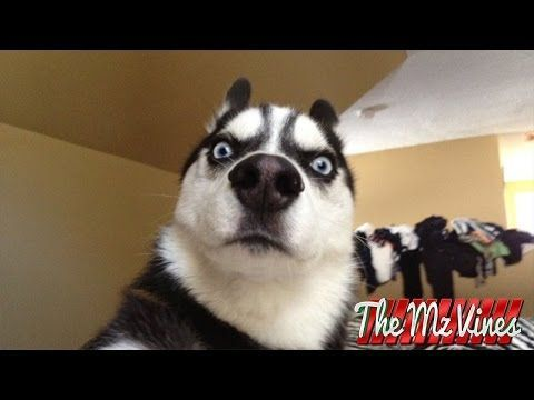 Funny Dogs Video Compilation 2015 - YouTube