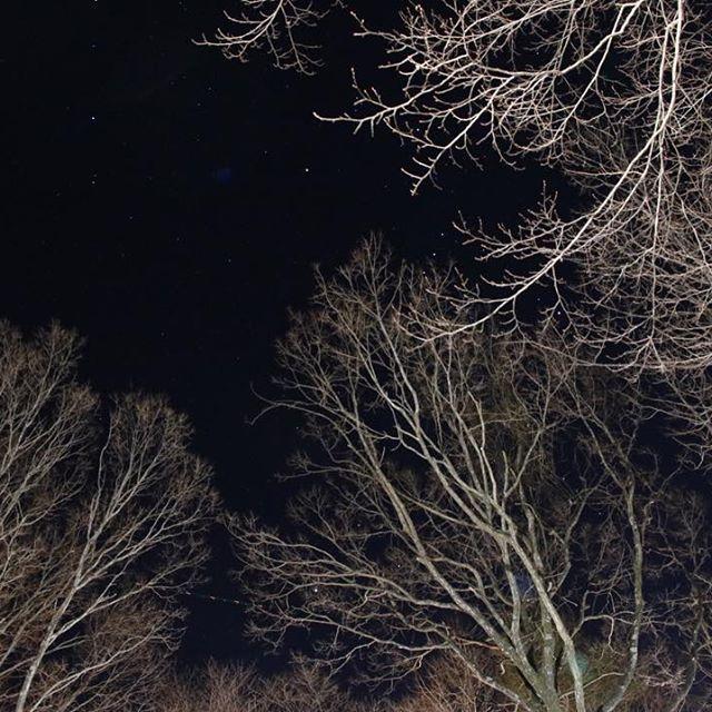 【takuya.k85】さんのInstagramをピンしています。 《夜の森の中から見上げた空  ライトがあったから星は写らなかったけど、これはこれで好きな感じに(^^) #那須 #星空 #冬 #森  #写真 #カメラ初心者 #カメラ友達募集 #カメラ好きな人と繋がりたい #写真好きな人と繋がりたい #写真撮ってる人と繋がりたい #カメラ男子  #カメラ女子  #東京カメラ部 #igersjp  #canon  #ファインダー越しの私の世界》