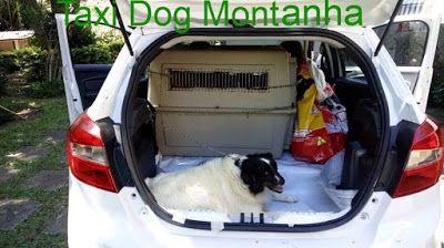 TAXI DOG MONTANHA TRANSPORTE DE ANIMAIS NO RIO DE JANEIRO: MIGUEL PEREIRA-RJ para MADUREIRA