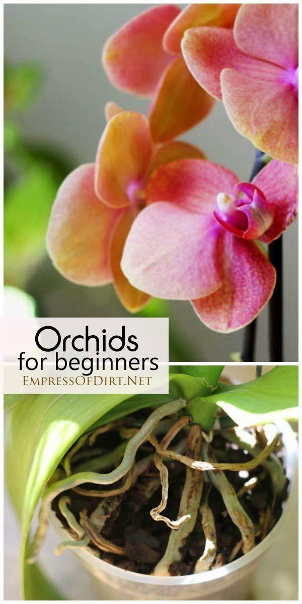 Orchidées pour les débutants
