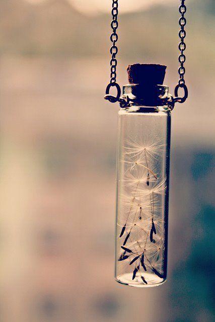 dandelion in a small jar. LOVE.
