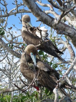 Global Basecamps Galapagos Guide: Tips for Your Dream Galapagos Vacation, Photos by Global Basecamps