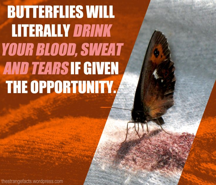 Butterflies are indeed a lovely creation from Above, did you know the strange about these beautiful butterflies?