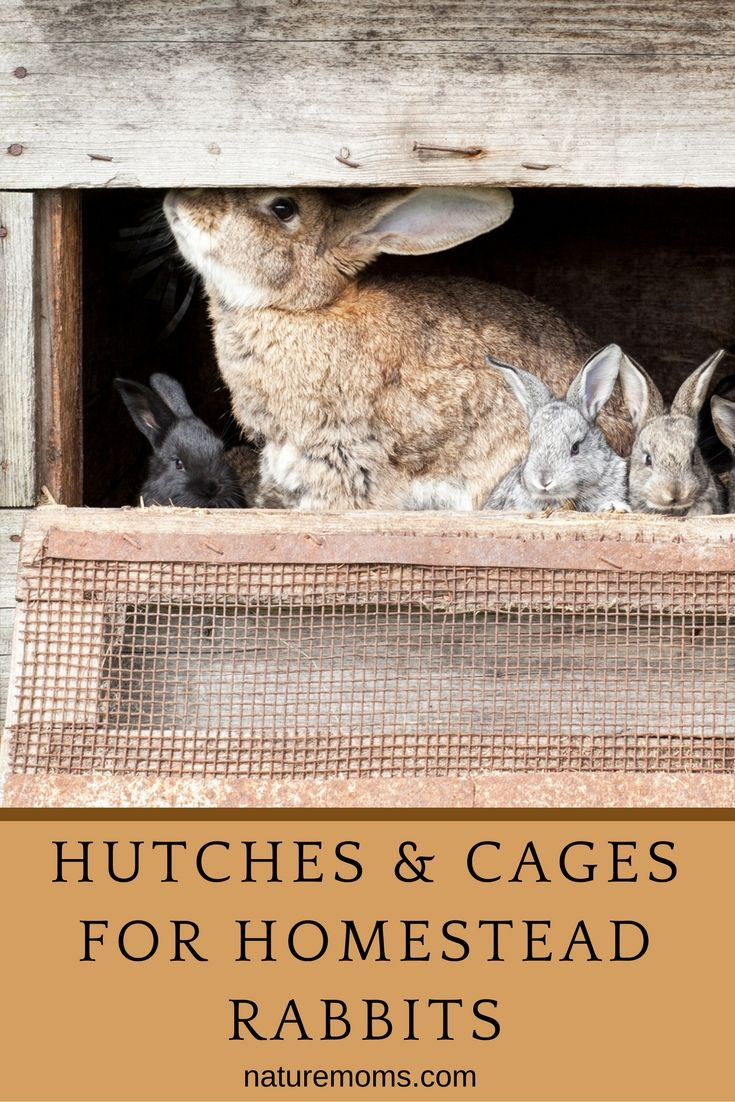 Their cage or hutch will be the place for your rabbit's food, water, and sleep. If it's outdoors, it will also provide protection and shelter.