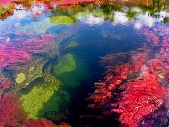 "This is the Caristales River, located just outside of the town ""La Macarena"" in Columbia, South America. It's algae and moss that turn a rainbow of different colours in the short time between wet and dry seasons. Amazing!"