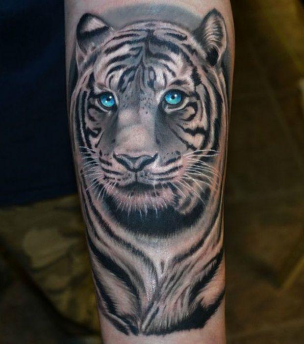 Tatouage d'un tigre blanc sur le bras: un magnifique félin aux yeux bleus