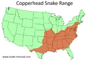 Copperhead Snake Information & Facts- snake control